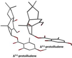 Cytotoxic and antifungal activities of melleolide