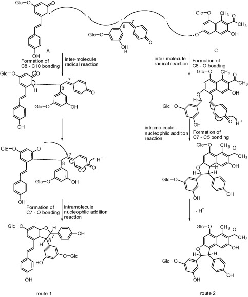 Neuroprotective Naphthalene And Flavan Derivatives From Polygonum