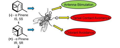 Repellency of pinene against the house fly musca domestica download full size image ccuart Image collections