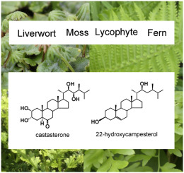 Occurrence of brassinosteroids in non-flowering land plants