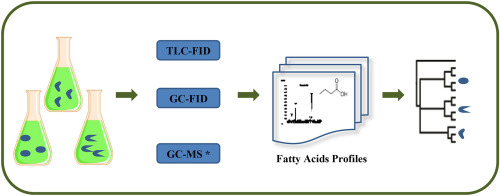 Use of fatty acids in the chemotaxonomy of the family