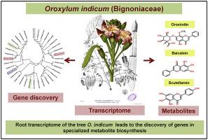 Oroxylum Indicum Epub Download