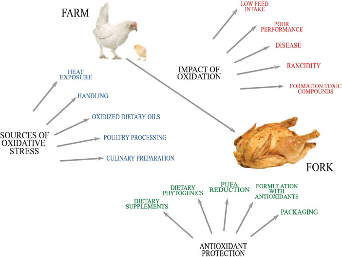 Oxidative Damage To Poultry From Farm To Fork Sciencedirect