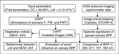 Influence of woody elements of a Norway spruce canopy on nadir
