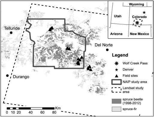 Detection of spruce beetle induced tree mortality using high and download high res image 567kb ccuart Image collections