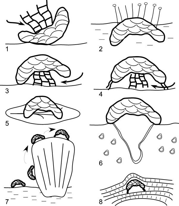 Palaeozoic Foraminifera Systematics Palaeoecology And Responses To
