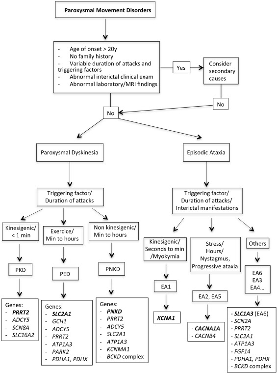 Paroxysmal Movement Disorders An Update