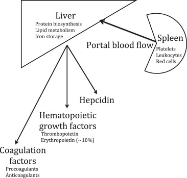 Hematologic manifestations of liver disease sciencedirect download high res image 231kb ccuart Image collections