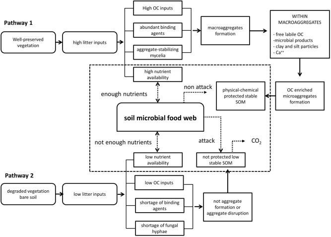 Changes in soil aggregation and microbial community