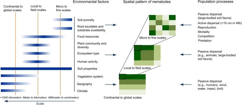 Spatial ecology of soil nematodes: Perspectives from global