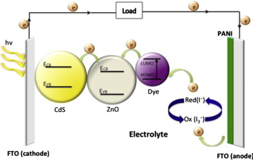 Fabrication of CdS nanorods and nanoparticles with PANI for