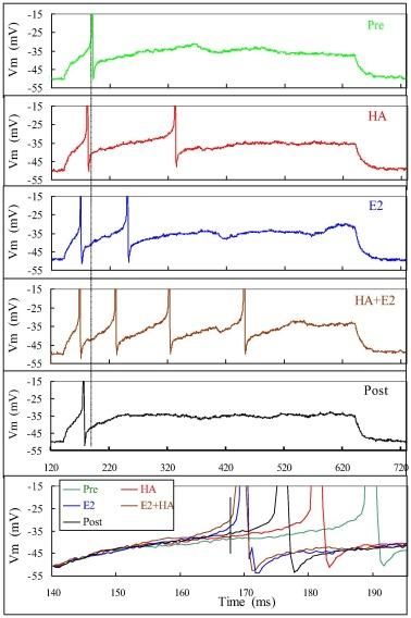 Analyses of rapid estrogen actions on rat ventromedial