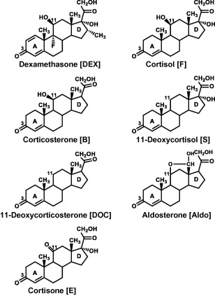 Evolution Of Corticosteroid Specificity For Human Chicken