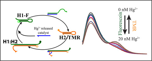 A FRET based aptasensor coupled with non-enzymatic signal