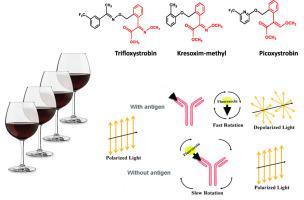 Fluorescence polarisation immunoassays for strobilurin