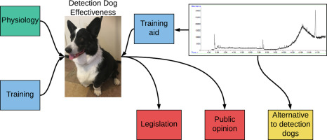 Critical review of dog detection and the influences of physiology
