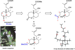 fluconazol-resistent candida albicans
