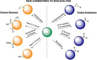 Expanding the synthetic scope of biocatalysis by enzyme discovery and protein engineering