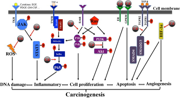 Systematic network assessment of the carcinogenic activities of