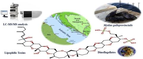 Toxine lipophile. lipofile - Deutsch Übersetzung - Rumänisch Beispiele | Reverso Context