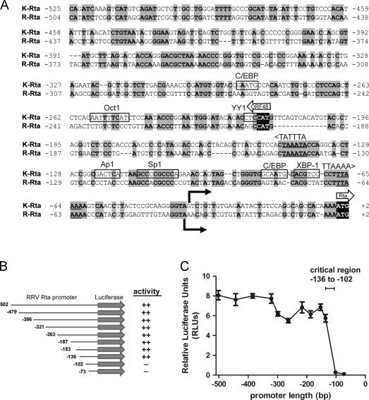 A critical Sp1 element in the rhesus rhadinovirus (RRV) Rta promoter