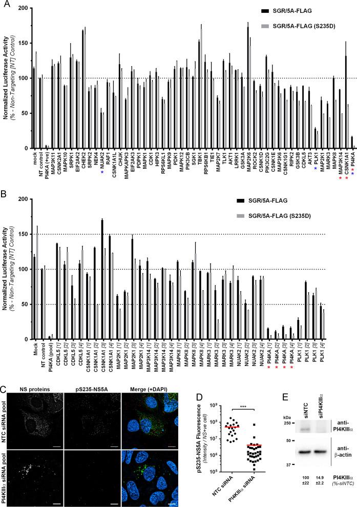 Phosphorylation of NS5A Serine-235 is essential to hepatitis