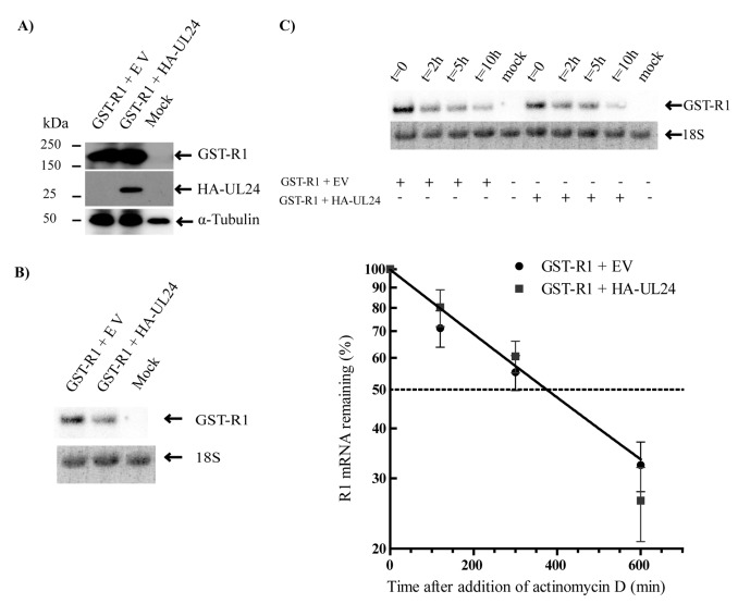 Regulation of viral gene expression by the herpes simplex
