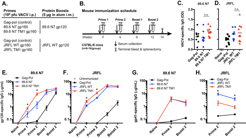 Increased surface expression of HIV-1 envelope is associated with