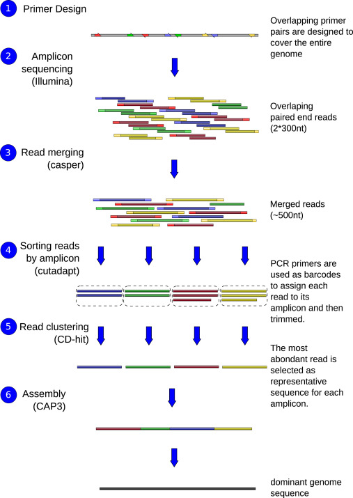 A complete protocol for whole-genome sequencing of virus