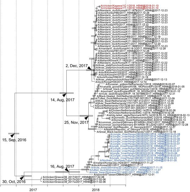 Genetics and pathogenicity of H5N6 highly pathogenic avian