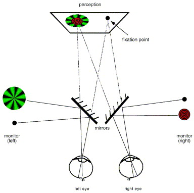Filling in at the natural blind spot contributes to binocular schematic diagram of the experimental setup in this example the stimuli were centered on the left eyes blind spot during the experiment observers ccuart Images