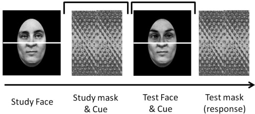 Holistic processing of faces happens at a glance - ScienceDirect