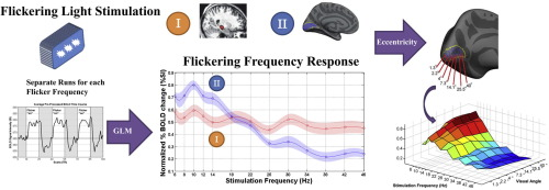 Achromatic temporal-frequency responses of human lateral