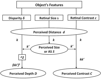 A depth illusion supports the model of General Object