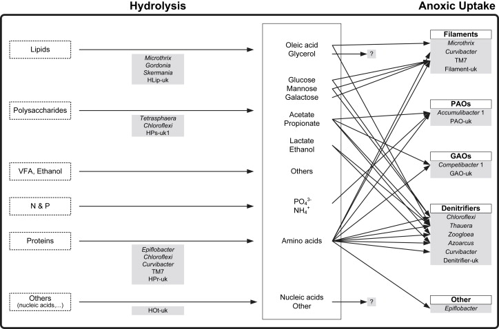 A conceptual ecosystem model of microbial communities in
