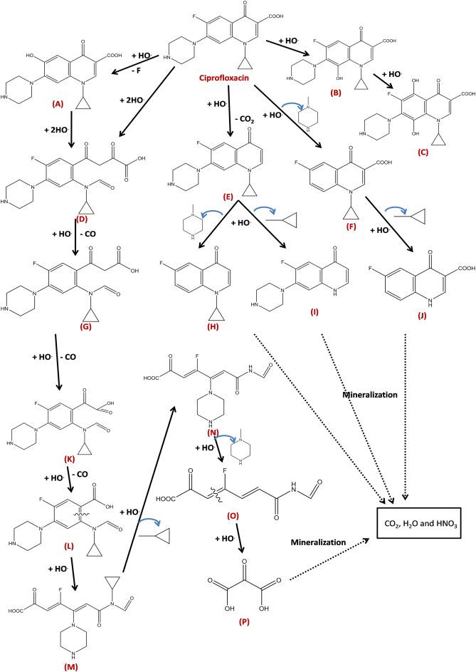 Rapid Degradation Mineralization And Detoxification Of