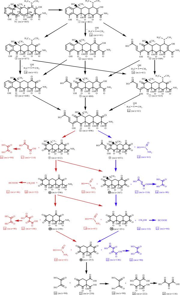 Evaluating Tetracycline Degradation Pathway And Intermediate