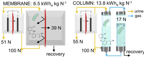 Membrane stripping enables effective electrochemical ammonia
