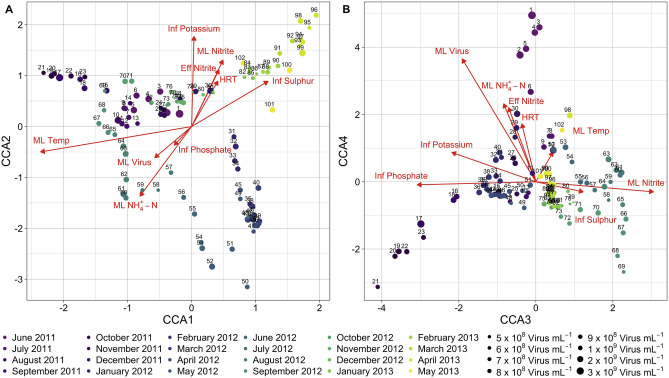 Coupled Virus Bacteria Interactions And Ecosystem Function