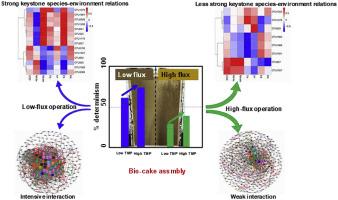 Bacterial assembly in the bio-cake of membrane bioreactors