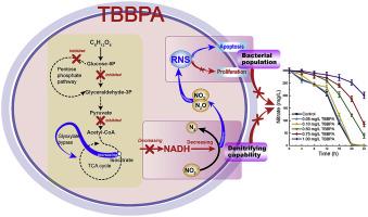 Tetrabromobisphenol A (TBBPA) inhibits denitrification via