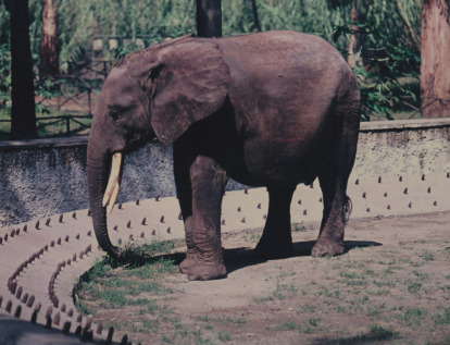 Elefantenzeitschrift aus einem Aquarius Thermochronologie datiert