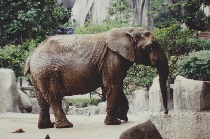 Elefantenzeitschrift aus einem Aquarius Ratschlag vom Arzt