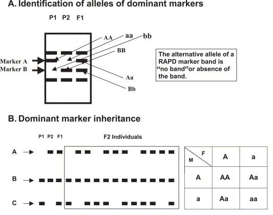 aquaculture genome technologies pdf
