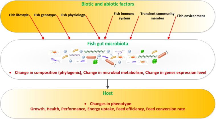 A new view of the fish gut microbiome: Advances from next