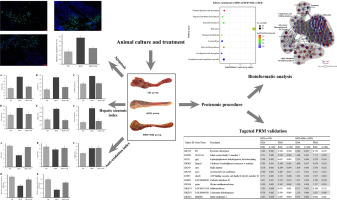 Protective function on liver and proteomic analysis of the improvement  mechanism of Sedum sarmentosum Bunge extract on nonalcoholic fatty liver  disease in Nile tilapia - ScienceDirect