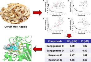 从桑白皮自然成分作为新的胰脂肪酶抑制剂