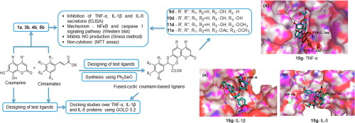 Structure-based design and synthesis of new 4-methylcoumarin