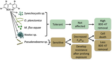 Tolerance of cyanobacteria to the toxicity of BDE-47 and