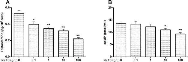 Sodium fluoride disrupts testosterone biosynthesis by affecting the